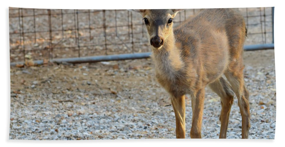 Deer Bath Sheet featuring the photograph Deer Fawn - 1 by Alan C Wade