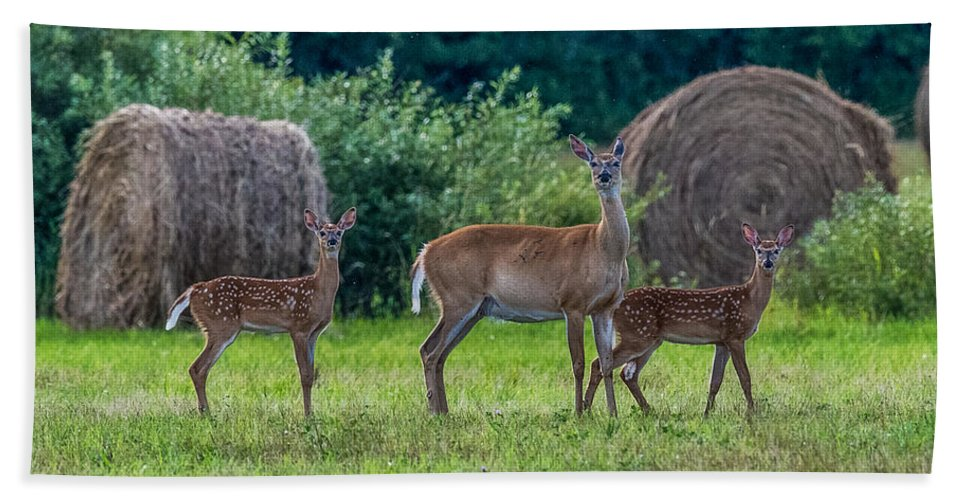 Deer In A Hay Field Bath Sheet featuring the photograph Deer In A Hay Field by Paul Freidlund