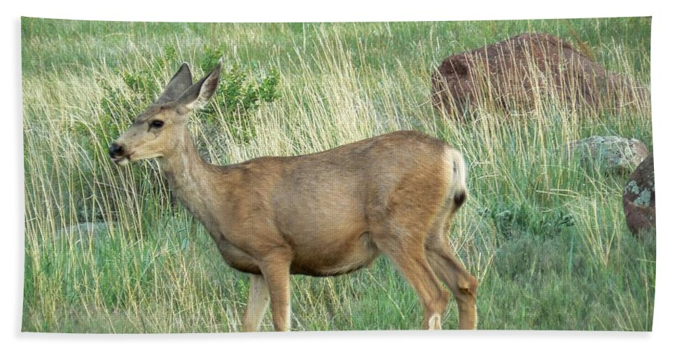 Boulder Bath Sheet featuring the photograph Deer In Boulder Colorado by Rincon Road Photography By Ben Petersen