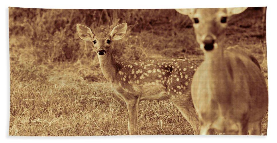 Deer Sepia Hand Towel featuring the photograph Deer Sepia V3 by Douglas Barnard