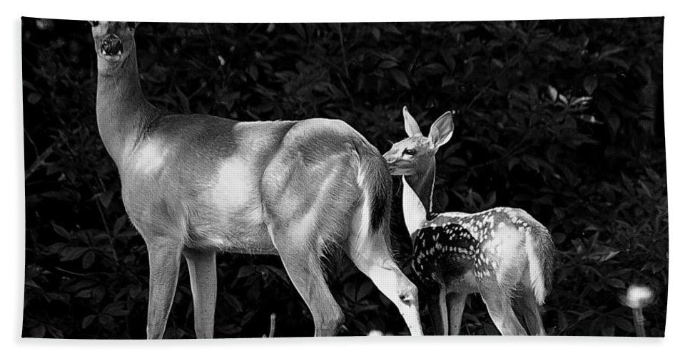 Deer Bath Sheet featuring the photograph Deer Tracks by Jenny Gandert