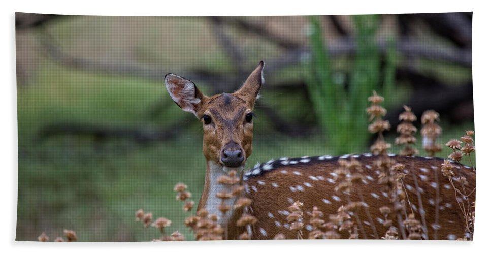 Deer Hand Towel featuring the photograph Deer V5 by Douglas Barnard