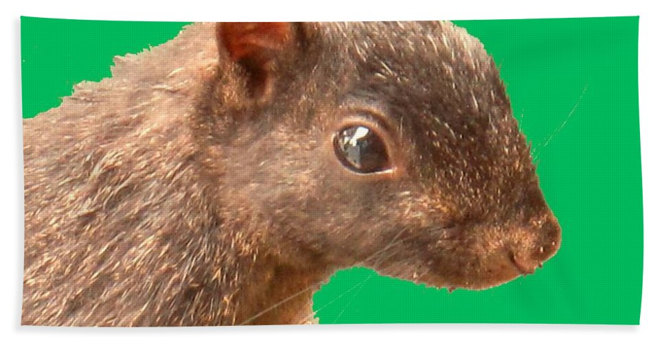 Squirrel Bath Sheet featuring the photograph Definately Bright Eyed by Ian MacDonald