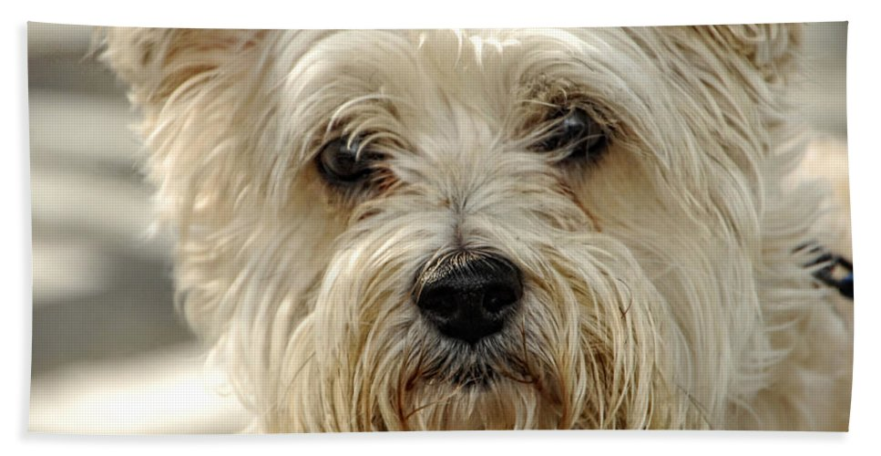 Dog Bath Sheet featuring the photograph Definition Of Cute by Donna Blackhall