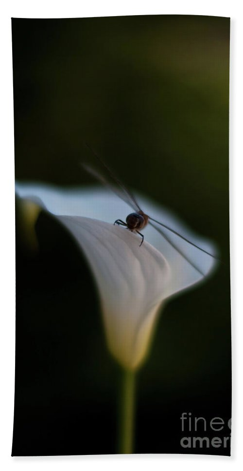 Dragonfly Bath Sheet featuring the photograph Delicate Dance by Mike Reid