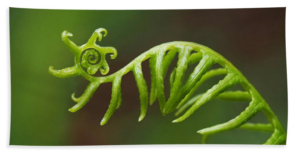 Fern Bath Sheet featuring the photograph Delicate Fern Frond Spiral by Rona Black
