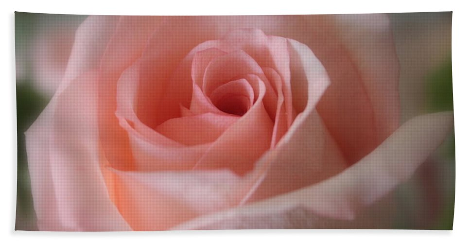 The Power Of Pink Hand Towel featuring the photograph Delicate Pink Rose by Carol Groenen