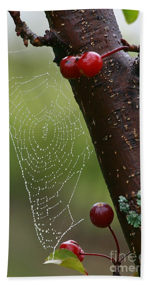 Tree Bath Sheet featuring the photograph Delicate Spider Weave by Deborah Benoit