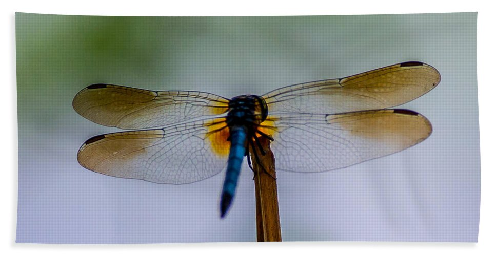Golden Bath Sheet featuring the photograph Delicate Wings by Stephen Whalen