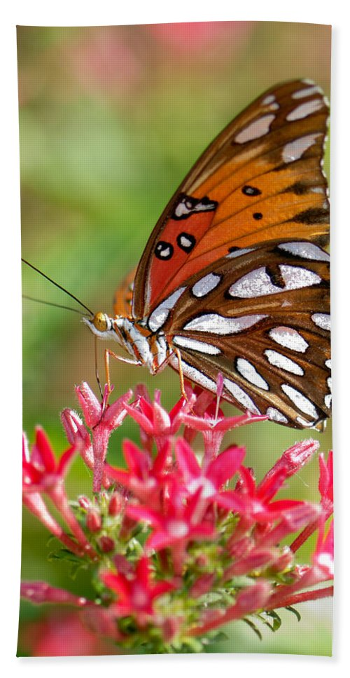 Butterfly Hand Towel featuring the photograph Delight by Betty LaRue