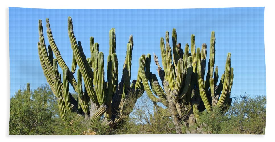 Desert Hand Towel featuring the photograph Desert Cacti In Cabo Pulmo Mexico by Charlene Cox
