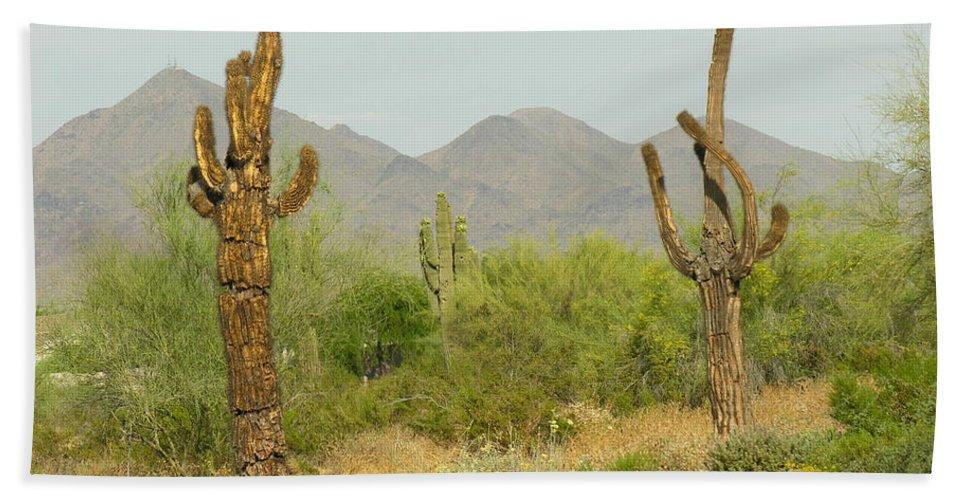 Cactus Bath Towel featuring the photograph Desert Cactus by Diane Greco-Lesser