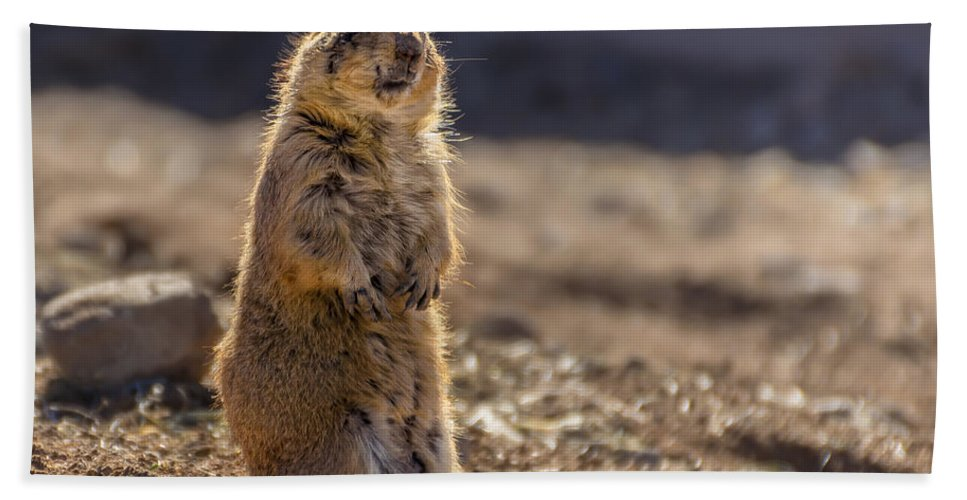 Animal Hand Towel featuring the photograph Desert Dawg by Mark Myhaver