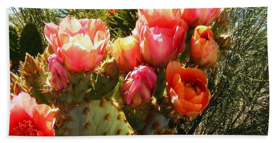 Cactus Blooms Bath Sheet featuring the photograph Desert Perfection by Marilyn Smith