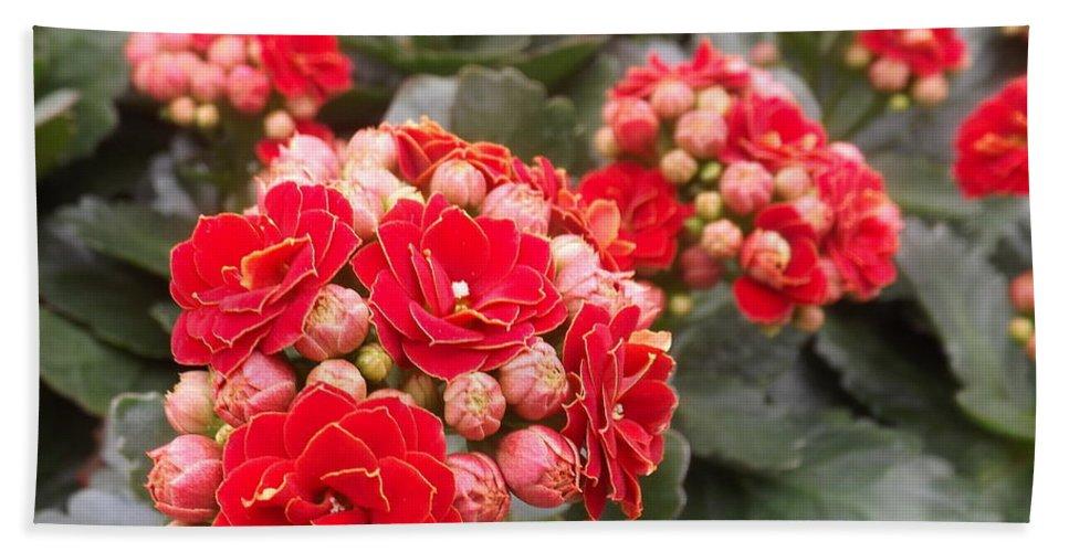 Plant Bath Sheet featuring the photograph Desert Rose by Lingfai Leung