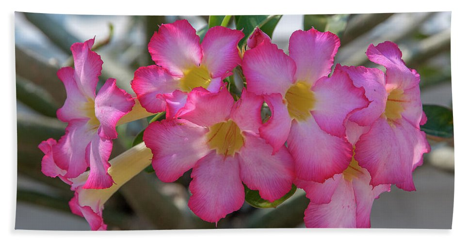 Scenic Bath Sheet featuring the photograph Desert Rose Or Chuanchom Dthb2105 by Gerry Gantt