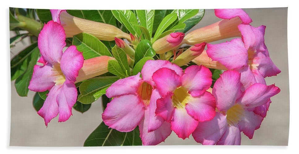 Scenic Bath Sheet featuring the photograph Desert Rose Or Chuanchom Dthb2106 by Gerry Gantt