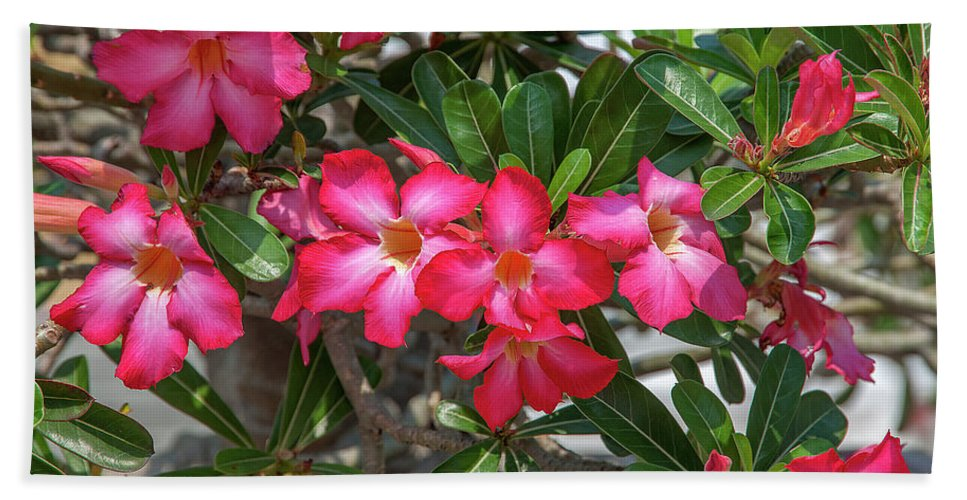 Scenic Bath Sheet featuring the photograph Desert Rose Or Chuanchom Dthb2107 by Gerry Gantt