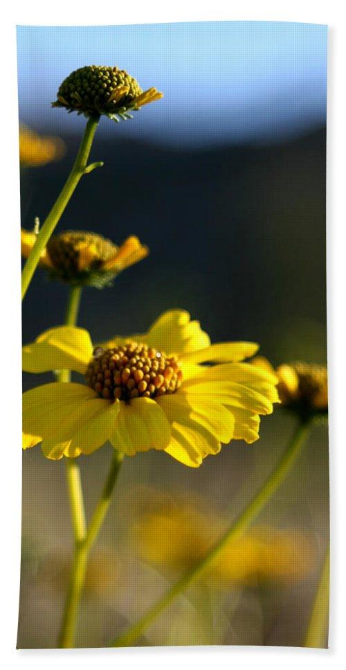 Desert Sunflower Bath Sheet featuring the photograph Desert Sunflower by Chris Brannen