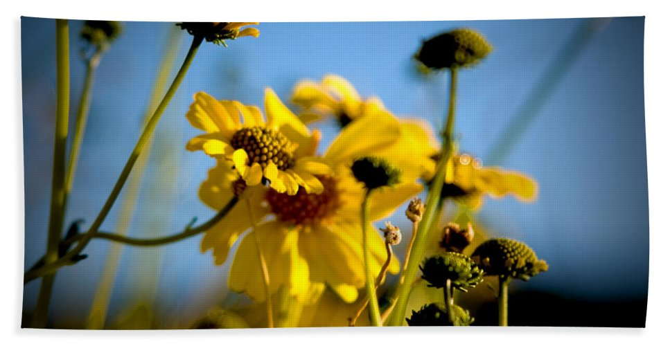 Desert Sunflower Bath Sheet featuring the photograph Desert Sunflower Variations by Chris Brannen