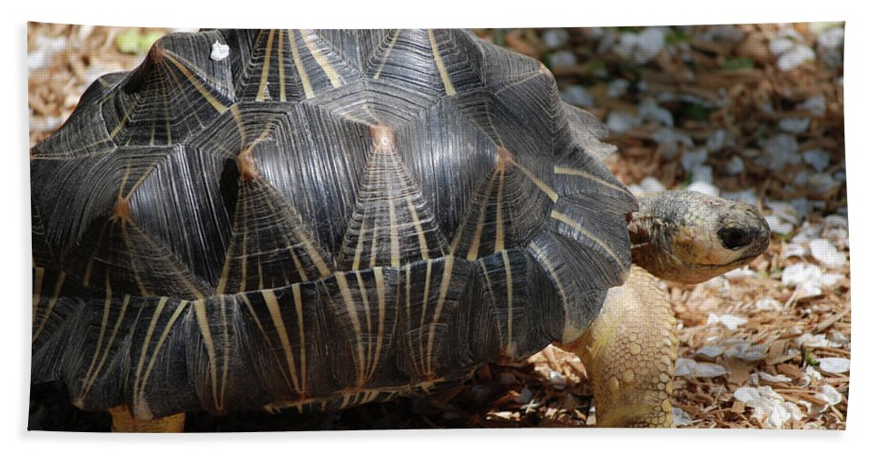 Turtle Hand Towel featuring the photograph Desert Turtle With An Unusual Shell In The Wild by DejaVu Designs