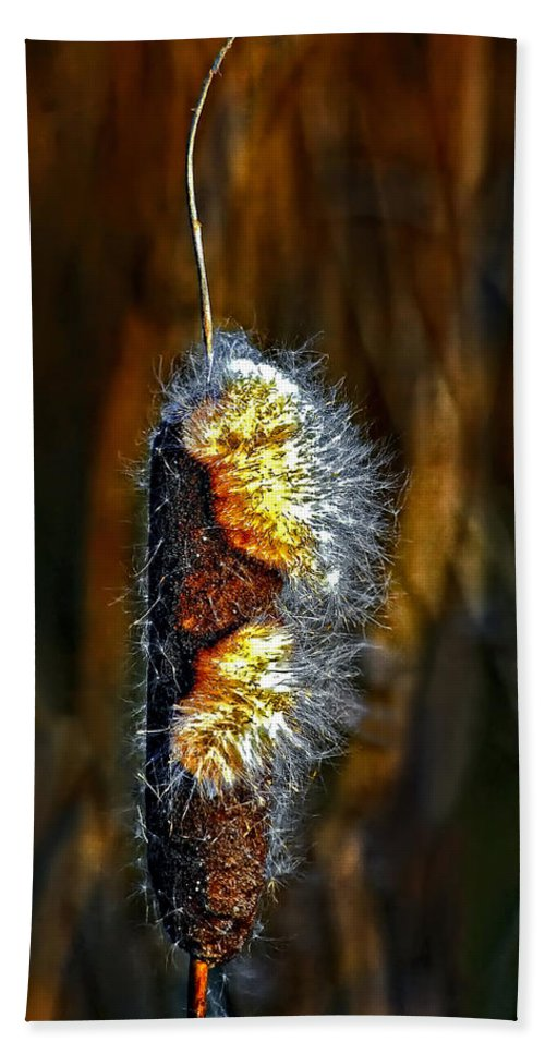 Cattail Hand Towel featuring the photograph Desire by Steve Harrington