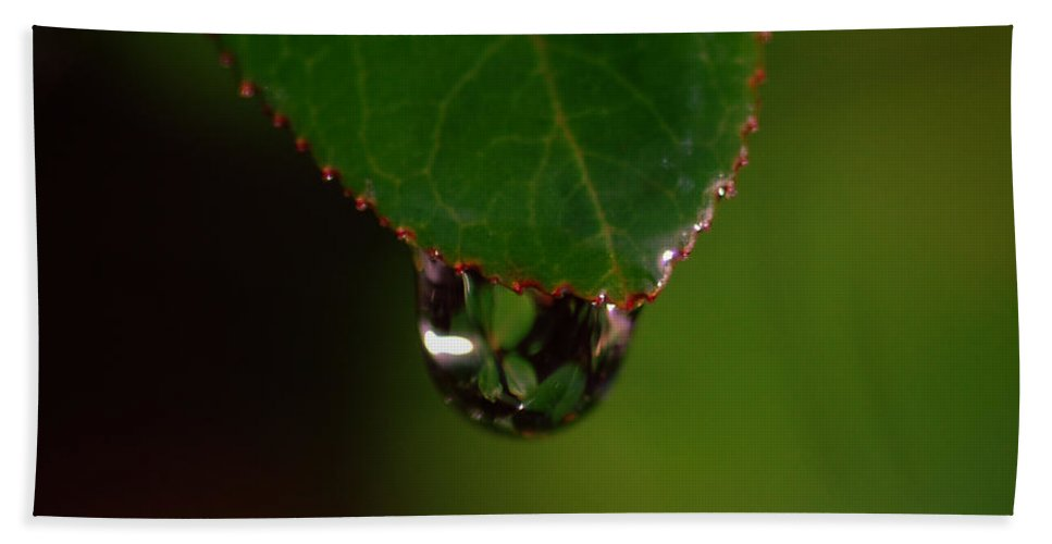 Plant Hand Towel featuring the photograph Dew Drop In by Donna Blackhall