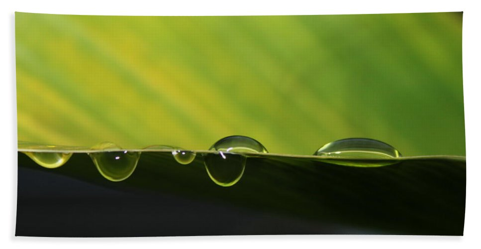 Leaf Hand Towel featuring the photograph Dew Drops by Lauri Novak