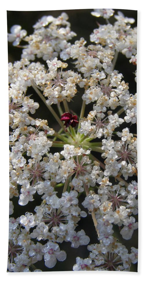 Wildflowers Hand Towel featuring the photograph Dew On Queen Annes Lace by Lynn Quinn