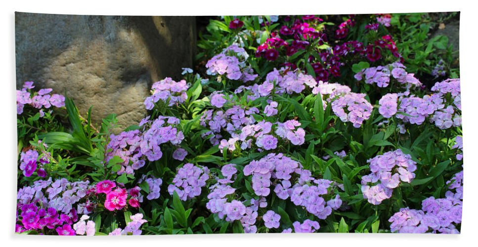 Dianthus Bath Sheet featuring the painting Dianthus Flower Bed by Corey Ford