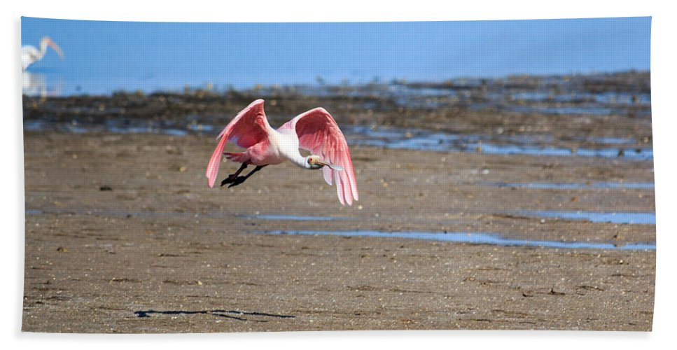 Florida Bath Sheet featuring the photograph Ding Darling - Roseate Spoonbill - Taking Flight by Ronald Reid
