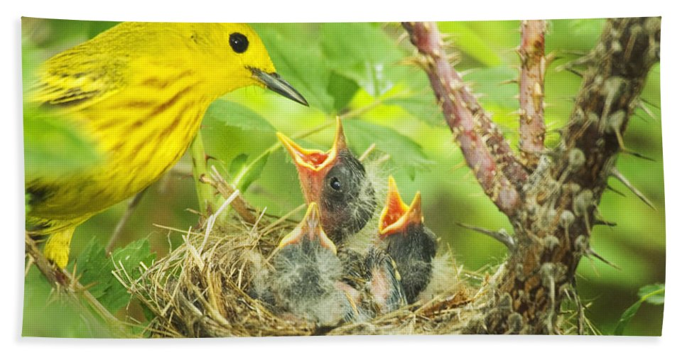 Yellow Warbler Hand Towel featuring the photograph Dinner At The Warblers by Gary Beeler