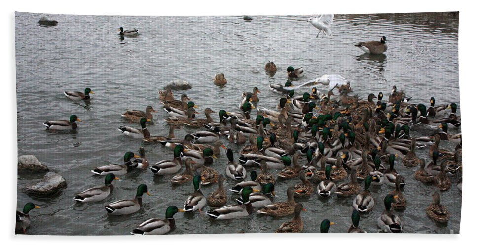 Ducks Hand Towel featuring the photograph Dinner Is Served by Carol Groenen