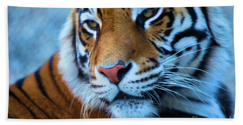 Big Cat Bath Sheet featuring the photograph Distracted by Adam Jewell