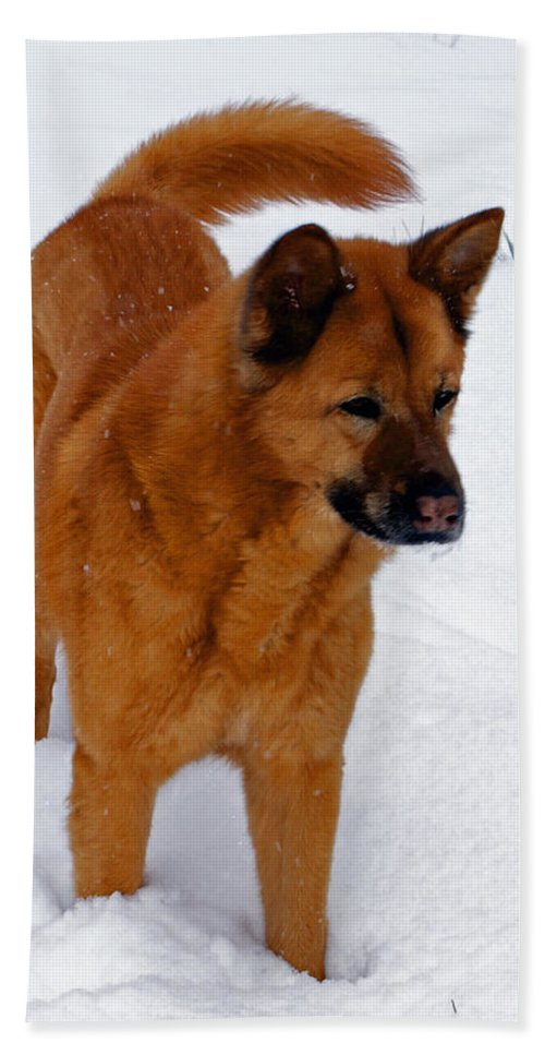 Snow Bath Towel featuring the photograph Dog Days Of Winter by Jean Haynes