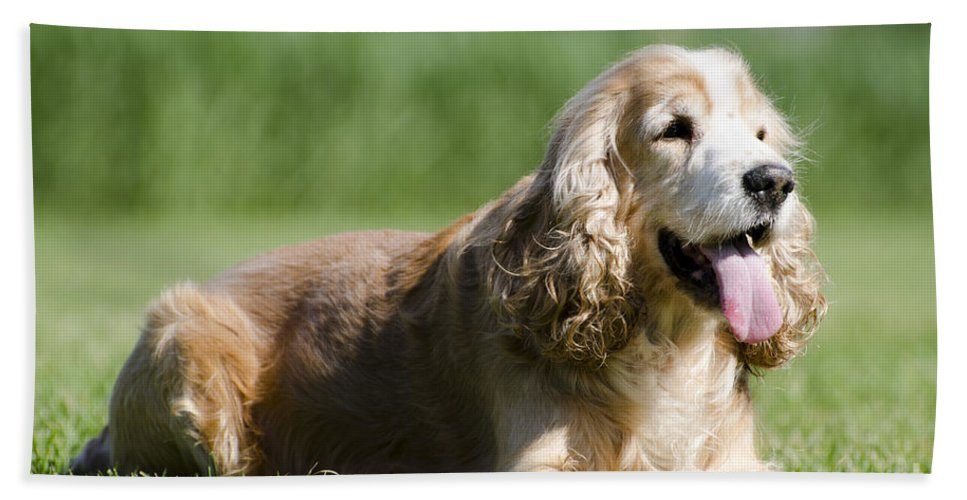 Dog Bath Sheet featuring the photograph Dog Lying Down On The Green Grass by Mats Silvan