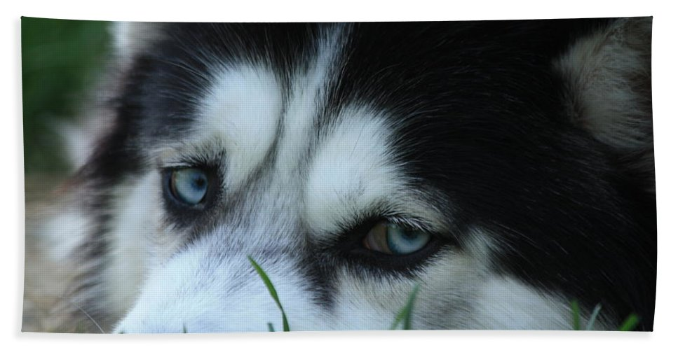 Dogs Bath Sheet featuring the photograph Dog Tired by Nunweiler Photography