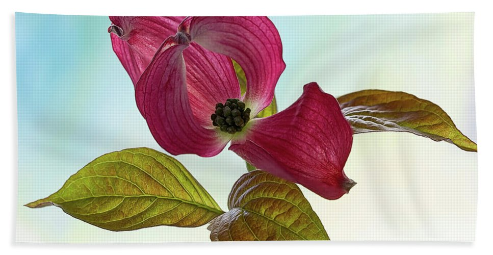 Floral Bath Sheet featuring the photograph Dogwood Ballet 2 by Shirley Mitchell