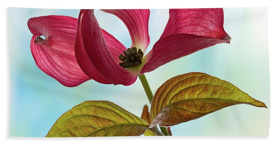 Floral Hand Towel featuring the photograph Dogwood Ballet 4 by Shirley Mitchell