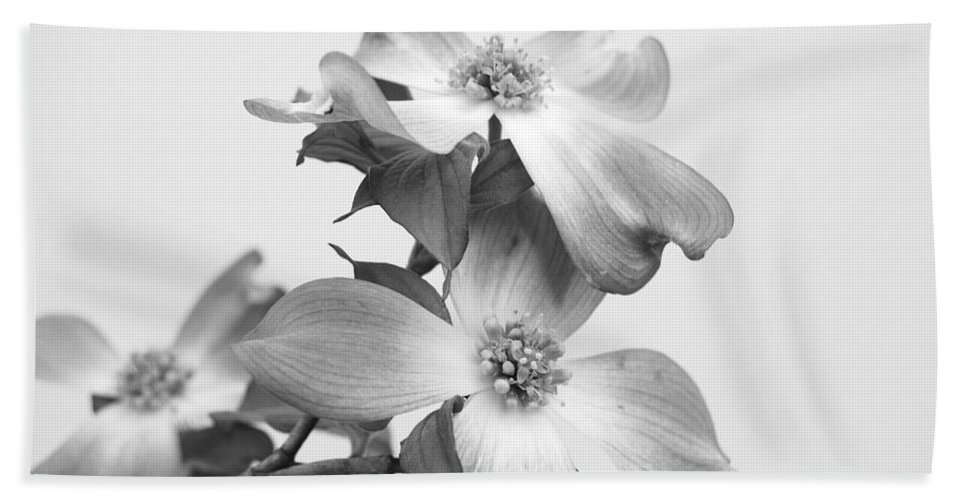 Dogwood Bath Sheet featuring the photograph Dogwood Bloom by Todd Hostetter