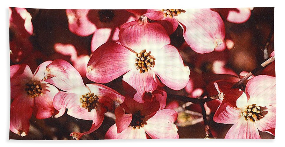 Dogwood Bath Sheet featuring the photograph Dogwood Harmony by Nancy Mueller