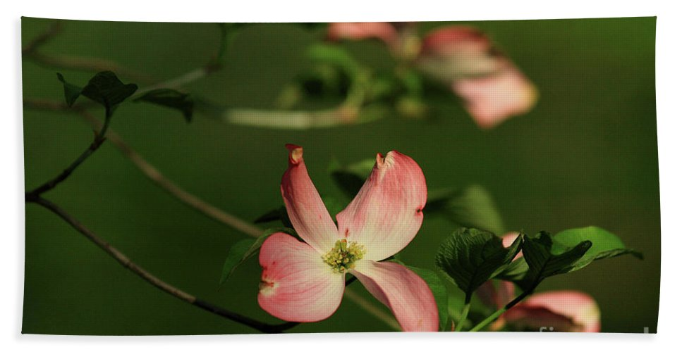 Dogwood Bath Sheet featuring the photograph Dogwood In Pink by Douglas Stucky