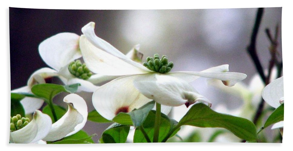 Dogwood Bath Sheet featuring the photograph Dogwood by J M Farris Photography