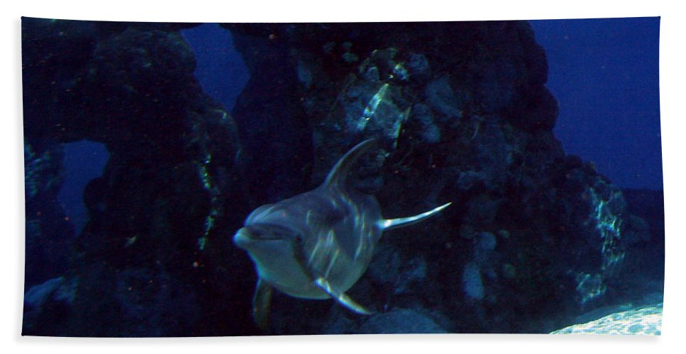 Dolphin Fish Aquatic Life Water Aquarium Sea Sandy Shore Rock Reef Hand Towel featuring the photograph Dolphin by Andrea Lawrence