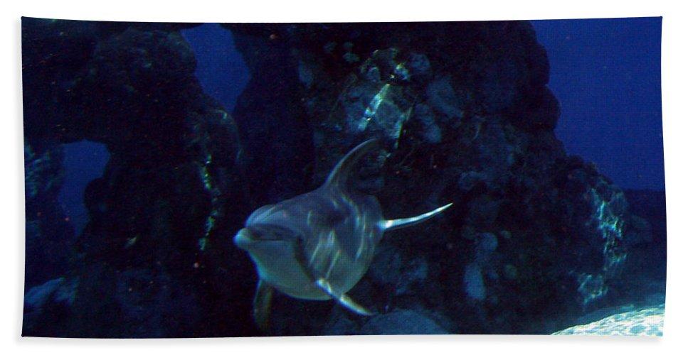 Dolphin Fish Aquatic Life Water Aquarium Sea Sandy Shore Rock Reef Bath Sheet featuring the photograph Dolphin by Andrea Lawrence