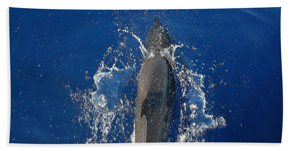 Dolphin Hand Towel featuring the photograph Dolphin by J R Seymour