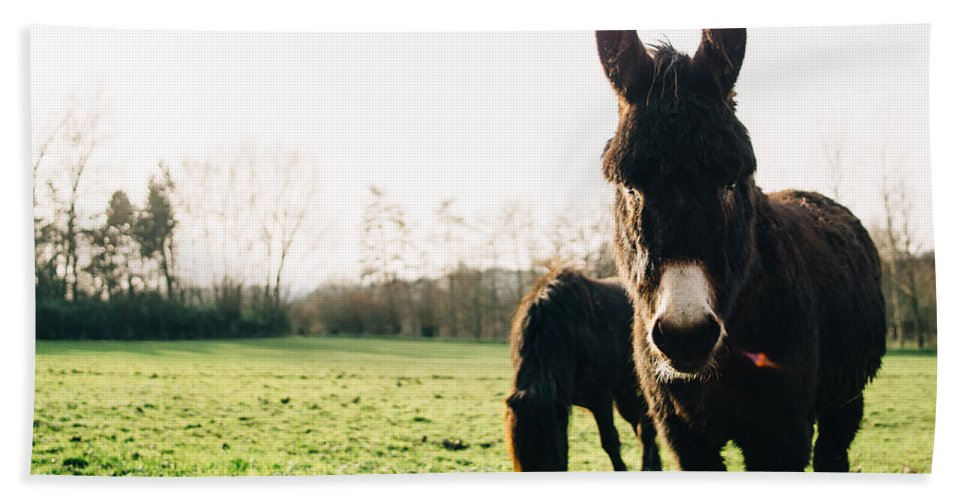 Winter Bath Towel featuring the photograph Donkey And Pony by Pati Photography
