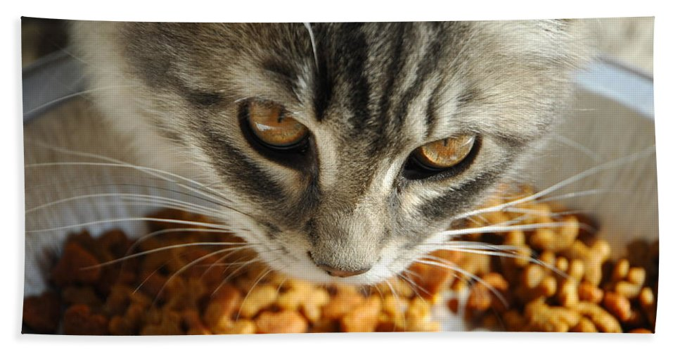 Cat Bath Sheet featuring the photograph Don't Even Think About It by Donna Blackhall