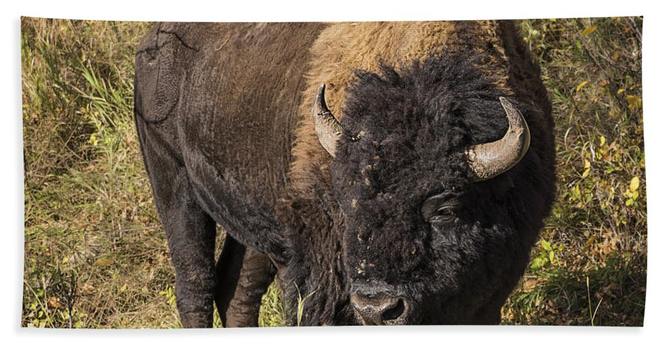 Don't Mess With This Bison Bath Sheet featuring the photograph Don't Mess With This Bison by Priscilla Burgers