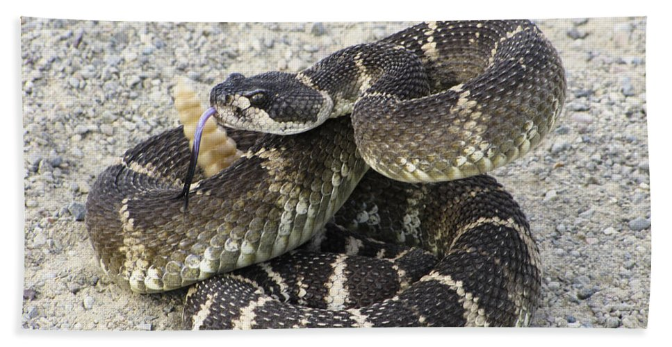 Rattlesnake Bath Towel featuring the photograph Don't Step On Me by Karen W Meyer